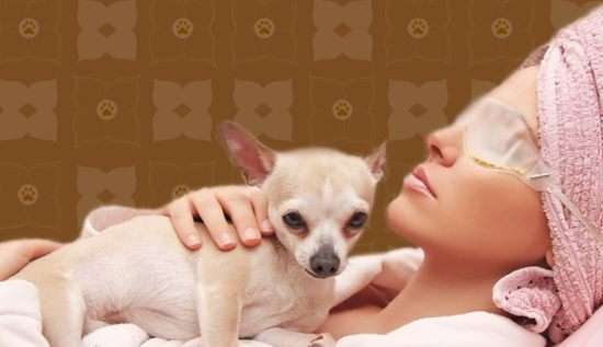 Luxurious Pet Spas