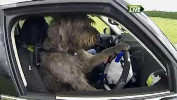 Dog Driving Schools