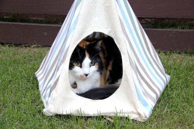 DIY Feline Tents