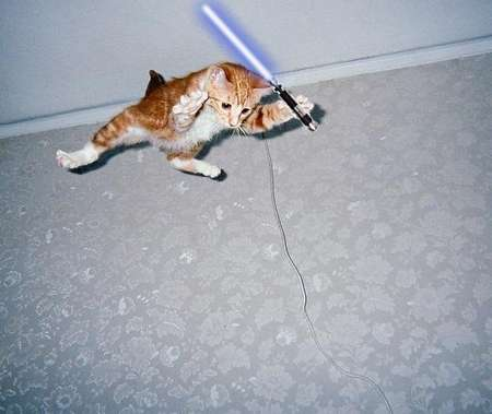 Jedi Pet Photography