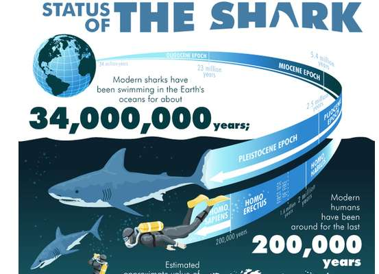 Status of the shark