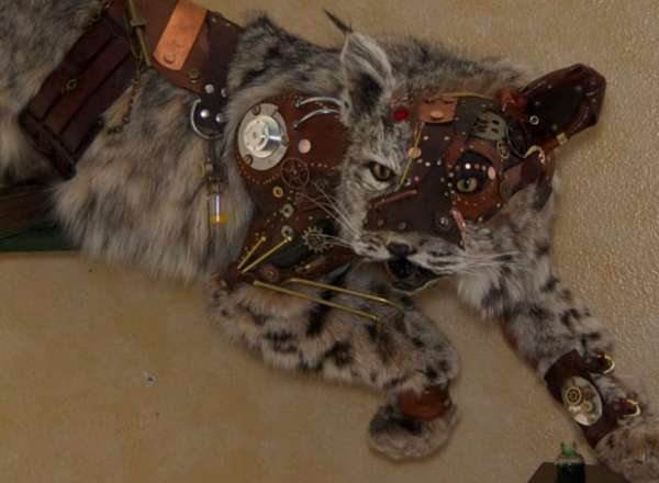 Cyborg Wildcat Taxidermy
