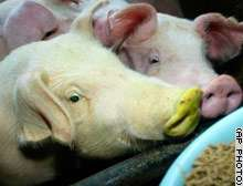 Stem Cell Research: Will fluorescent green pigs produce better quality bacon?