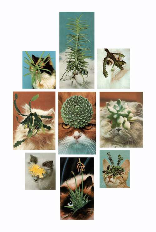 Cat Cactus Collages