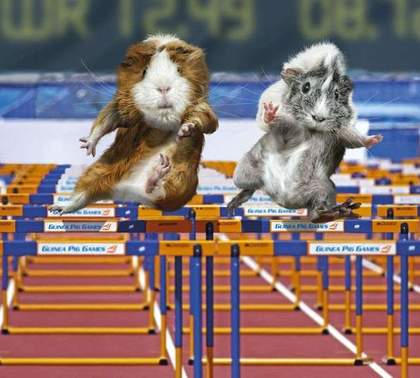 Rodent Olympic Calendars