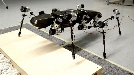 Stick Insect-Inspired Robots