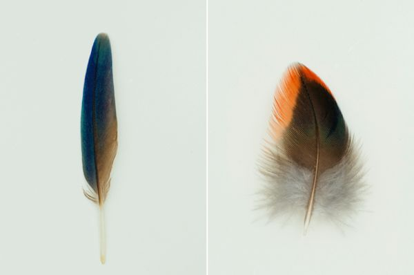Colorful Plumage Photography