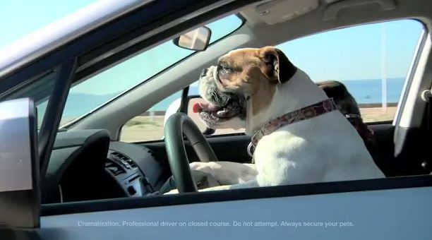 Adorable Dog-Driving Ads