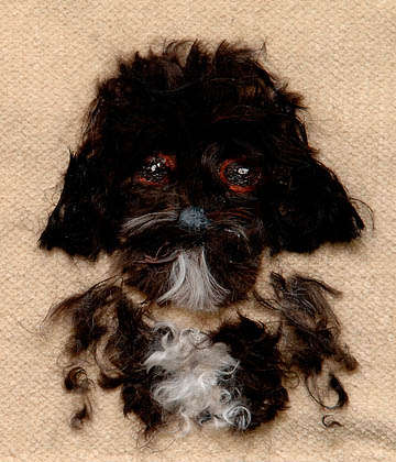 Hairy Pet Depictions