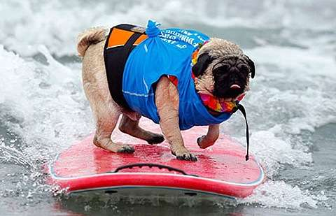 Canine Surftography