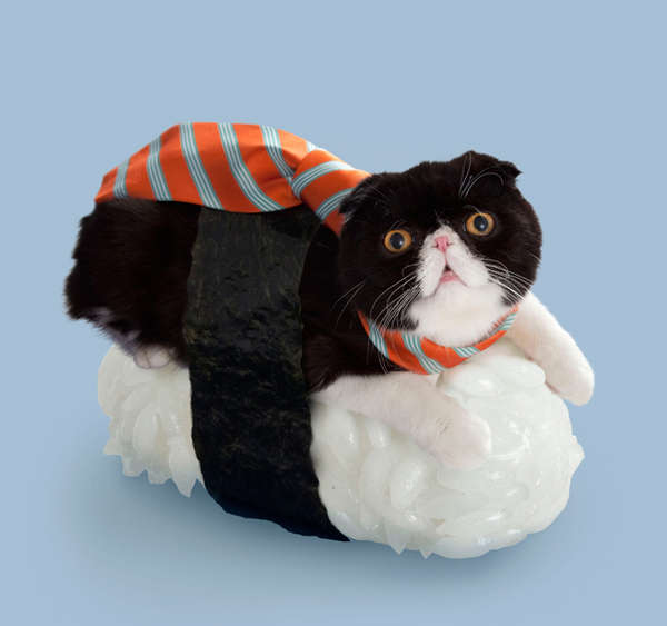 Odd Feline Sushi Pairings