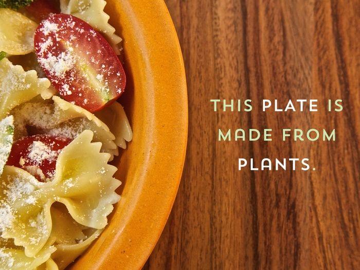 Plant-Based Dishware