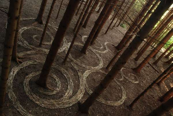 Fascinating Forest Artistry