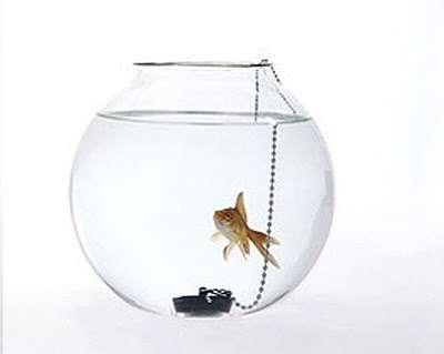 Symbolic Fish Bowls