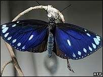 Taiwan Shuts Highway for Butterflies
