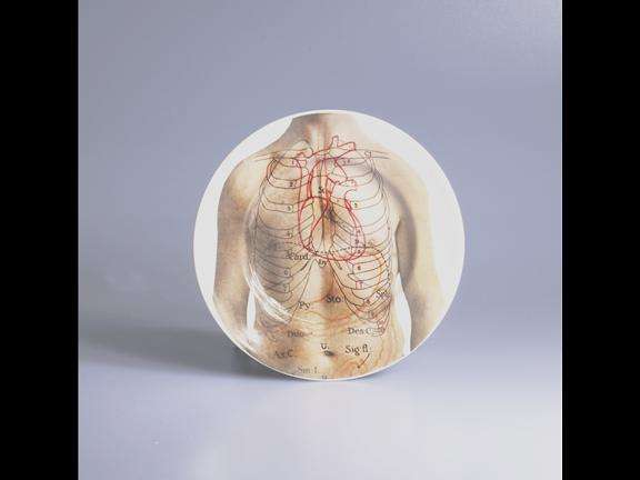 Anatomical Place Settings