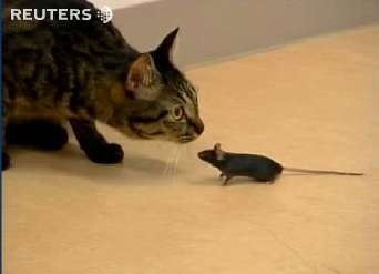 Mutated Mice Play With Cats