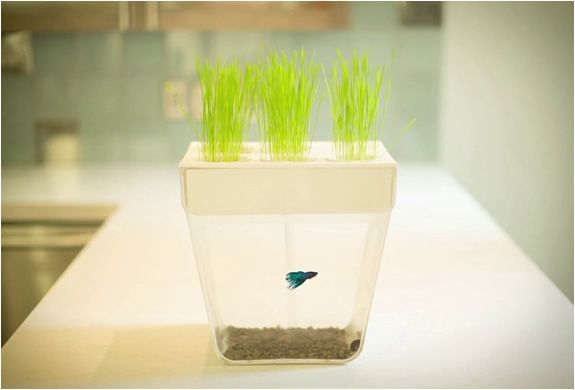 Mini Ecosystem Fishtanks