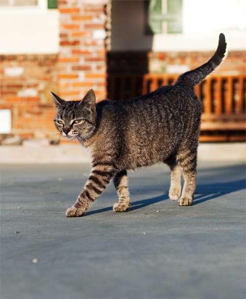 Fashionable Feline Blogs