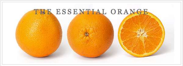 The Essential Orange: Jeremy Gutsche on Exploiting Chaos