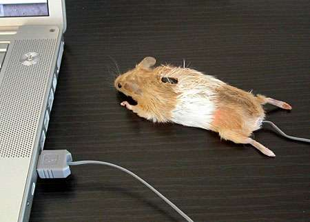 The Real Mouse Mouse