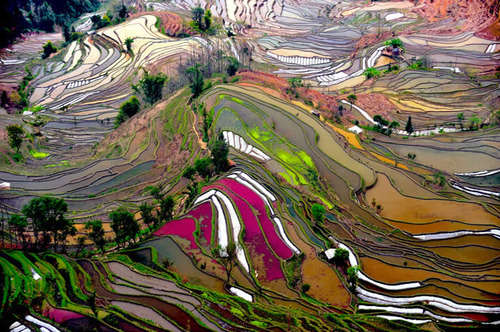 Thierry Bornier 
