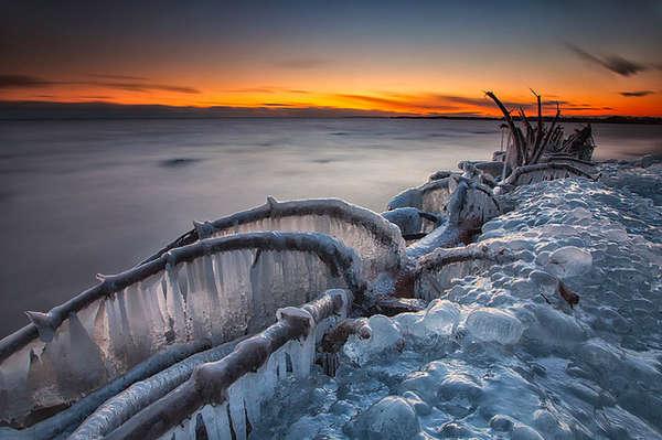 Frozen Tree Photography