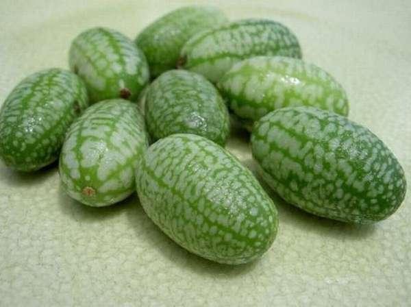 Miniaturized Summer Fruits