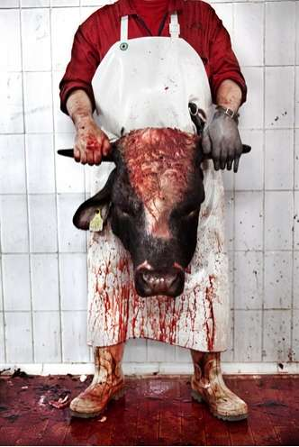 Shocking Slaughterhouse Shoots