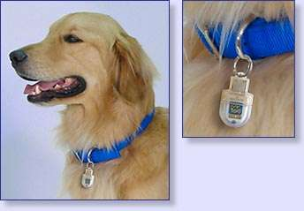 Doggie Flash Drive
