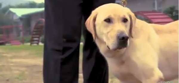 Drug-Sniffing Canine Clones