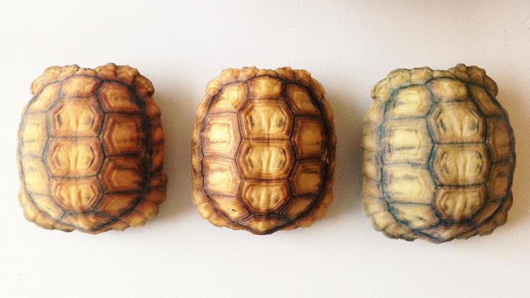 3D-Printed Tortoise Shells