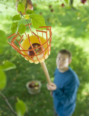 Clever Fruit-Picking Contraptions