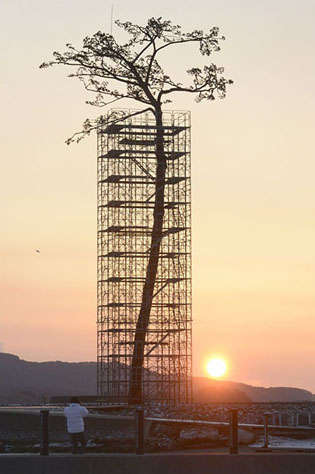 Tsunami Tree Monuments