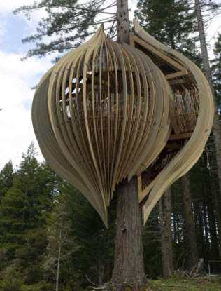 Treetop Restaurants