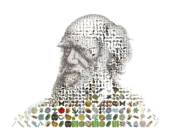 Experimental Evolutionary Mosaics