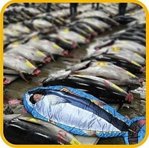 Fishy sleeping bags tuna fish sleeping bag for What does a tuna fish look like