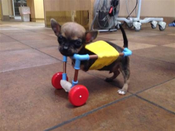 Adorable Canine Wheelchairs