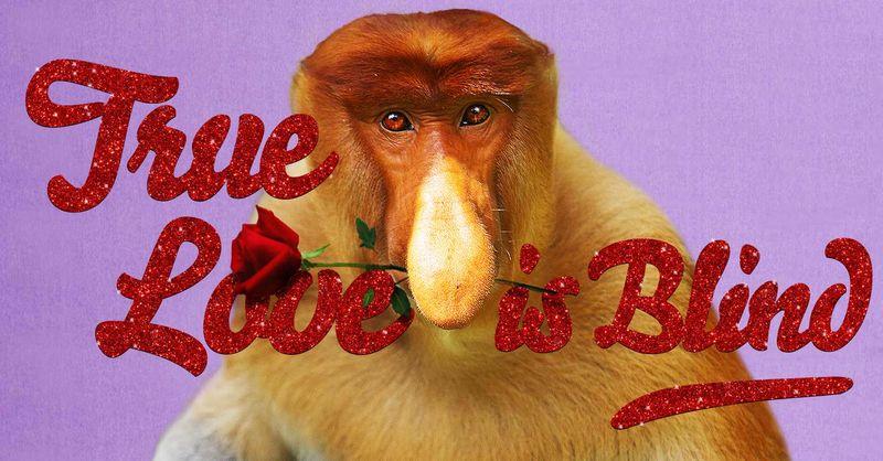 Endangered Animal Valentine's Cards