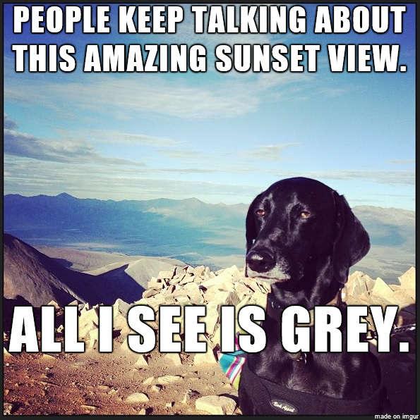 Unimpressed Dog Memes