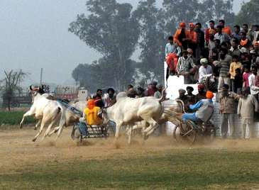Unusual Rural Olympics