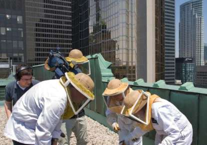 Urban Beekeeping