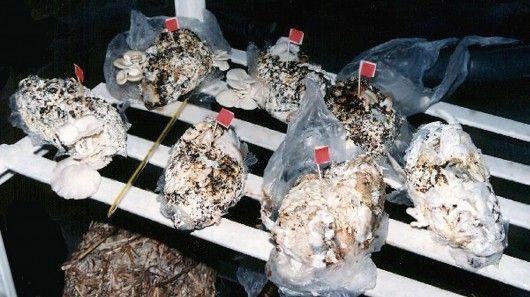 Mushroom-Growing Diapers
