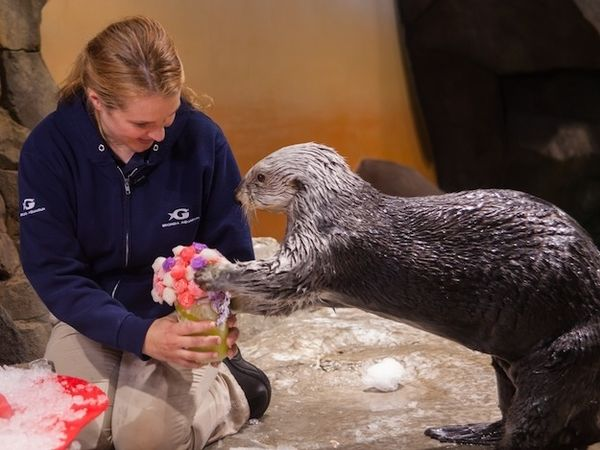 Valentine-Giving Otters