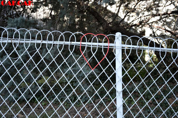 Heart-Bearing Metal Fences