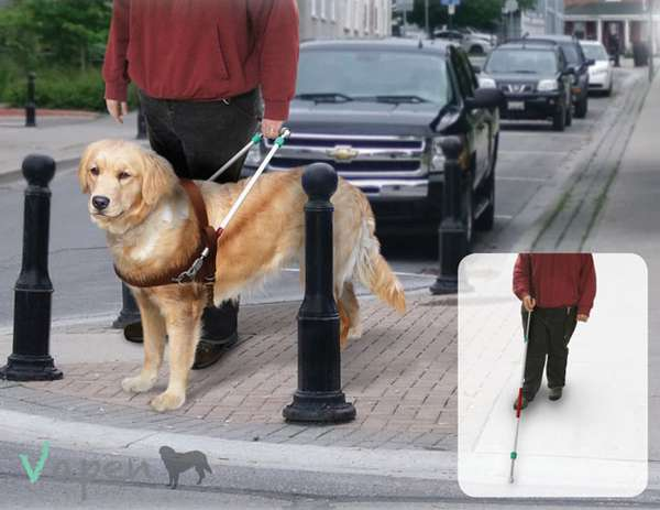 Vapen Guide Dog Harness