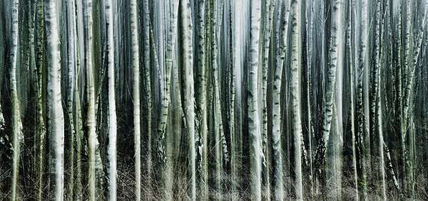 Blurry Birch Photography