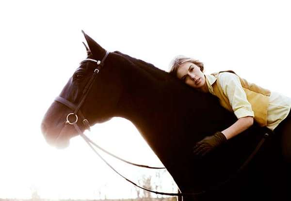 Sun-Drenched Equestrian Photography