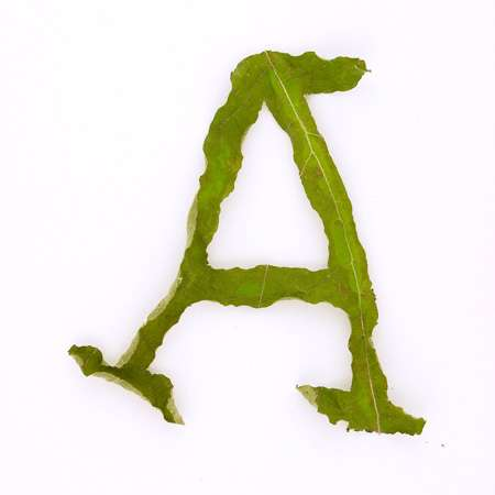 Leafy Typography