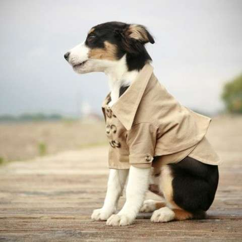 Classy Canine Jackets